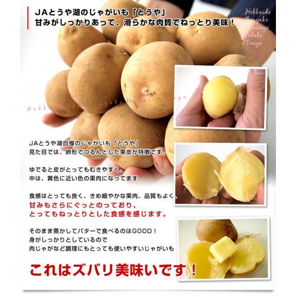 送料無料 北海道から産地直送 JAとうや湖 じゃがいも 湖ばれいしょ「とうや」 Lサイズ 10キロ 馬鈴薯 ジャガイモ04