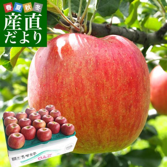 長野県より産地直送 JAながの 志賀高原のシナノスイート ご家庭用 約5キロ (12玉から20玉) 送料無料 林檎 りんご リンゴ01