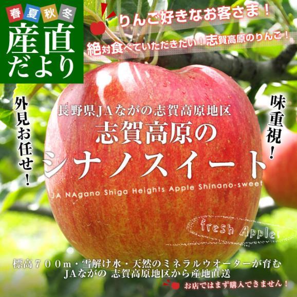 長野県より産地直送 JAながの 志賀高原のシナノスイート ご家庭用 約5キロ (12玉から20玉) 送料無料 林檎 りんご リンゴ02