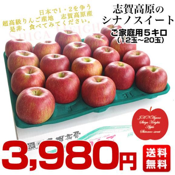 長野県より産地直送 JAながの 志賀高原のシナノスイート ご家庭用 約5キロ (12玉から20玉) 送料無料 林檎 りんご リンゴ03