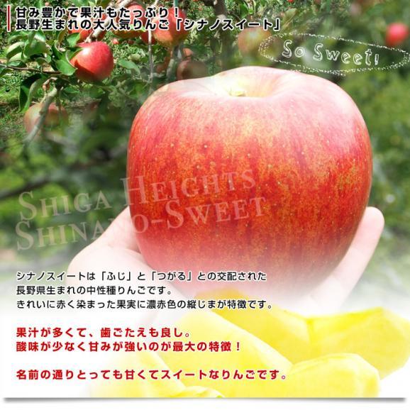 送料無料 長野県より産地直送 JAながの 志賀高原のシナノスイート ご家庭用 約5キロ (12から18玉) 林檎 りんご リンゴ04