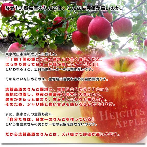 長野県より産地直送 JAながの 志賀高原のシナノスイート ご家庭用 約5キロ (12玉から20玉) 送料無料 林檎 りんご リンゴ05
