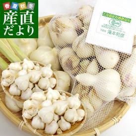 送料無料 北海道から産地直送 赤井川村 滝本さんの有機JAS完熟にんにく どっさり2キロ(1キロ×2袋) にんにく ニンニク 大蒜