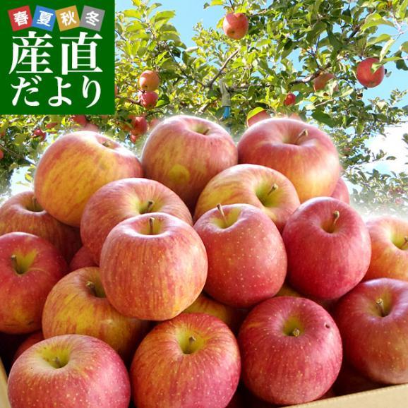 送料無料 山形県より産地直送 山形朝日町APPLE'S サンふじりんご 約9から10キロ 林檎 リンゴ01
