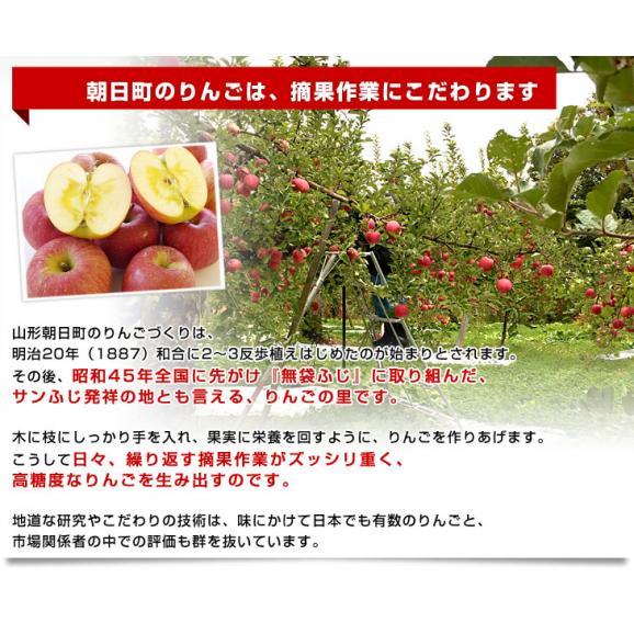 山形県より産地直送 山形朝日町APPLE'S サンふじりんご 9キロから10キロ 林檎 リンゴ 送料無料06