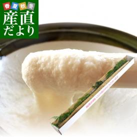 送料無料 佐賀県より産地直送 JAからつ 自然薯 2Lサイズ 1本入 約1.2キロ 化粧箱 じねんじょ 山芋 やまいも