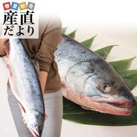 北海道の味!新物の新巻きサケがお買い得!