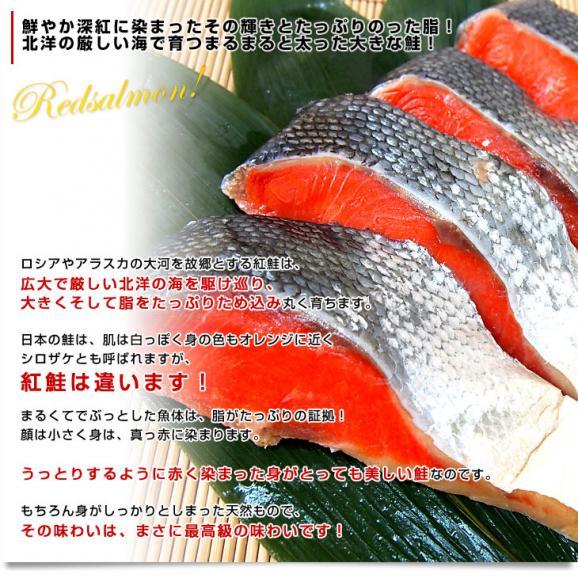 送料無料 北海道加工 天然紅鮭 <中辛> 1尾姿切り身 約1.6キロ ロシア産04