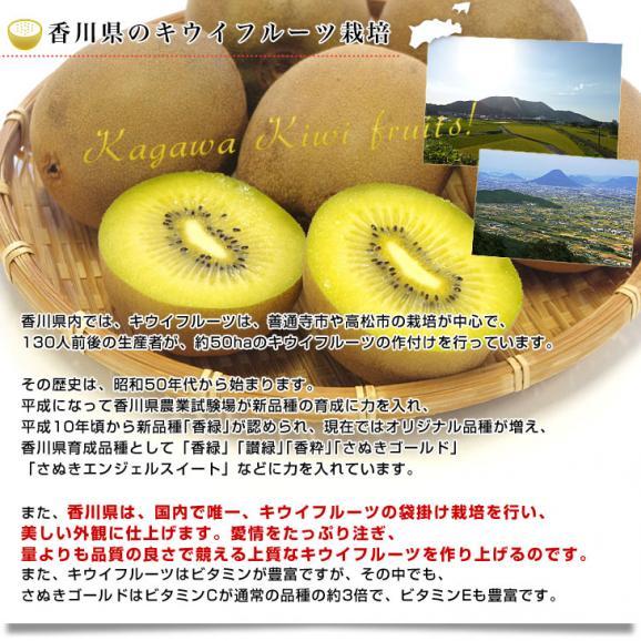 香川県より産地直送 JA香川県 キウイフルーツ さぬきゴールド ご家庭用 1キロ(4玉から8玉) 送料無料 キウィ06