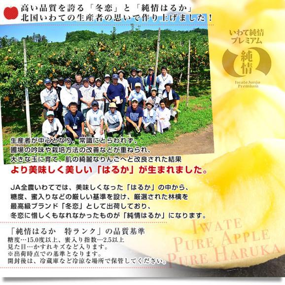 送料無料 岩手県より産地直送 JA全農いわて いわて純情りんご 純情はるか 5キロ ご家庭用冬恋 (16から25玉) 林檎 りんご リンゴ05