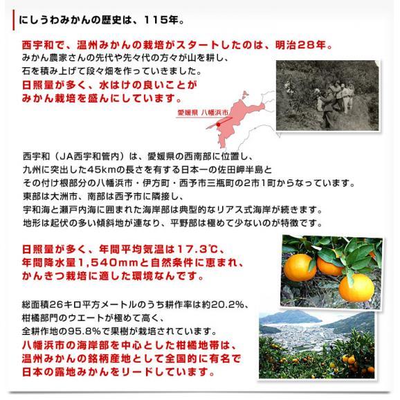 送料無料 愛媛県より産地直送 JAにしうわ 八協共選 西宇和みかん 和 (なごみ) SからSSサイズ 5キロ(60玉から80玉前後) 蜜柑 ミカン06