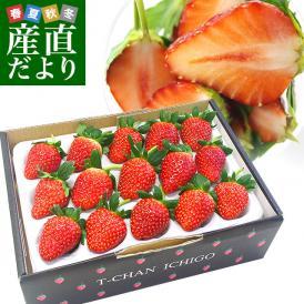 人気の苺農家から収穫したてを産地直送でお届けします。
