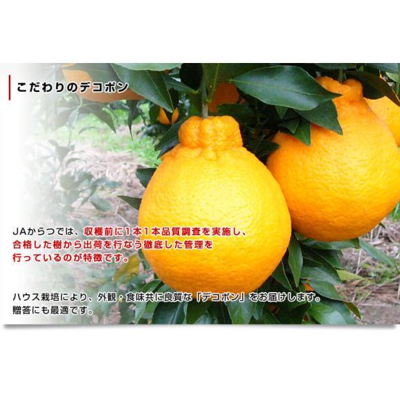 佐賀県より産地直送 JAからつ デコポン 3.5キロ化粧箱(8玉から12玉入り) 産直だより 唐津 でこぽん 送料無料 柑橘 みかん オレンジ05