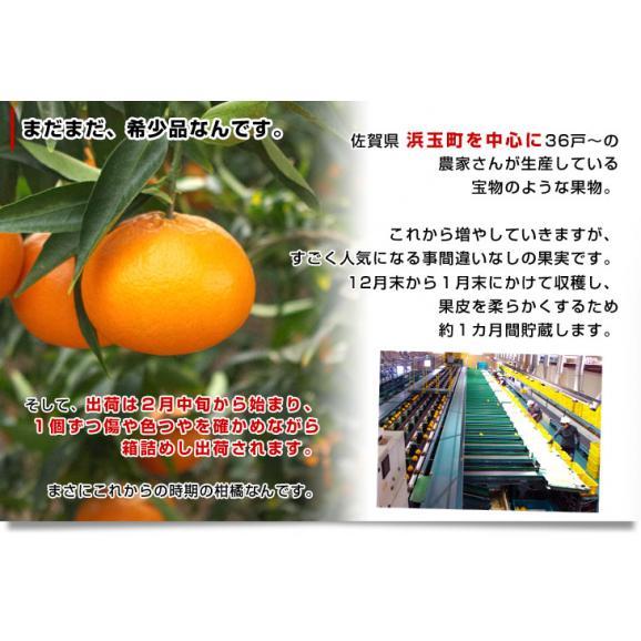 佐賀県より産地直送 JAからつ はまさき 小玉 SSサイズ 2.5キロ (20から25玉前後) 送料無料 唐津 浜崎05