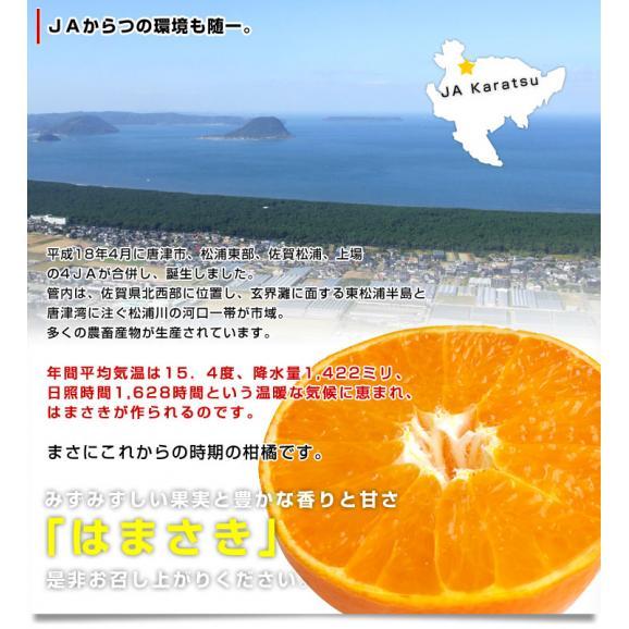 佐賀県より産地直送 JAからつ はまさき 小玉 SSサイズ 2.5キロ (20から25玉前後) 送料無料 唐津 浜崎06