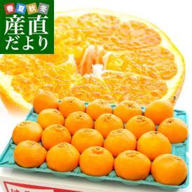 香川県より産地直送 JA香川県 はるみ Mから3L ちょっと訳あり 5キロ(12から28玉前後) 柑橘 オレンジ ハルミ