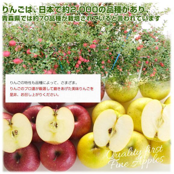 送料無料 青森県より産地直送 高木商店 マルタカブランド 王林りんご 秀品 3キロ(9から11玉入)林檎 りんご リンゴ06