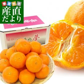 長崎県より産地直送 JA長崎せいひ 津之輝(つのかがやき) 3Lから2Lサイズ 優品 2.5キロ (15玉から20玉) 柑橘 オレンジ 津の輝 西彼 伊木力 大西海 送料無料
