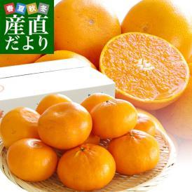 長崎県より産地直送 JA長崎せいひ 麗紅 (れいこう) 3LからLサイズ 優品以上 2.5キロ (10玉から15玉) 送料無料 柑橘 オレンジ れいこうかん 麗紅柑 西彼 伊木力