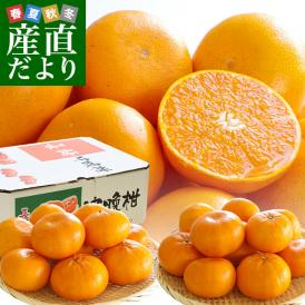 あのせとかの兄弟品種!とっても希少な極上柑橘「れいこう」