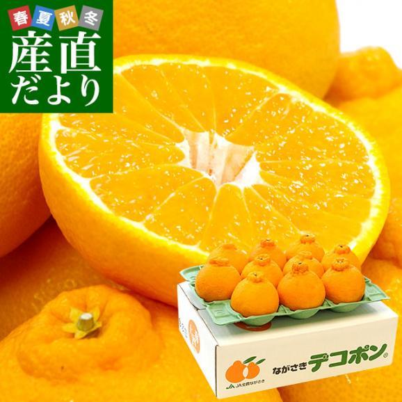 長崎県より産地直送 JA長崎せいひ 露地デコポン 優品  4LからLサイズ 3キロ (8玉から15玉) 送料無料 柑橘 かんきつ01