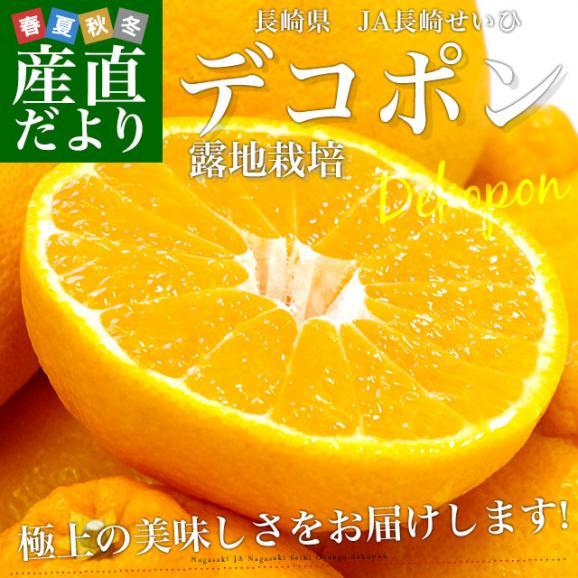 長崎県より産地直送 JA長崎せいひ 露地デコポン 優品  4LからLサイズ 3キロ (8玉から15玉) 送料無料 柑橘 かんきつ02