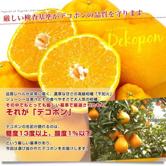 長崎県より産地直送 JA長崎せいひ 露地デコポン 優品  4LからLサイズ 3キロ (8玉から15玉) 送料無料 柑橘 かんきつ05