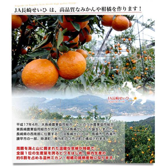 長崎県より産地直送 JA長崎せいひ 露地デコポン 優品  4LからLサイズ 3キロ (8玉から15玉) 送料無料 柑橘 かんきつ06