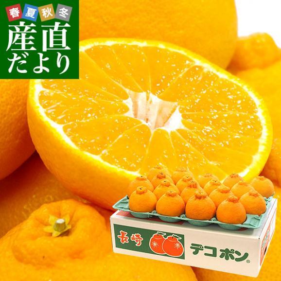 長崎県より産地直送 JA長崎せいひ 露地デコポン 優品  3LからLサイズ 5キロ (15玉から24玉) 送料無料 3月以降発送商品 柑橘 かんきつ01