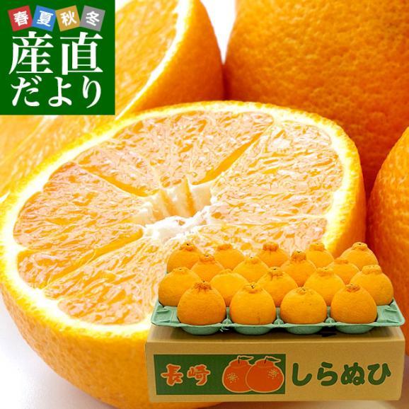 長崎県より産地直送 JA長崎せいひ 不知火 (しらぬひ) 優品 4LからLサイズ 5キロ (15玉から24玉) 送料無料 柑橘 かんきつ01