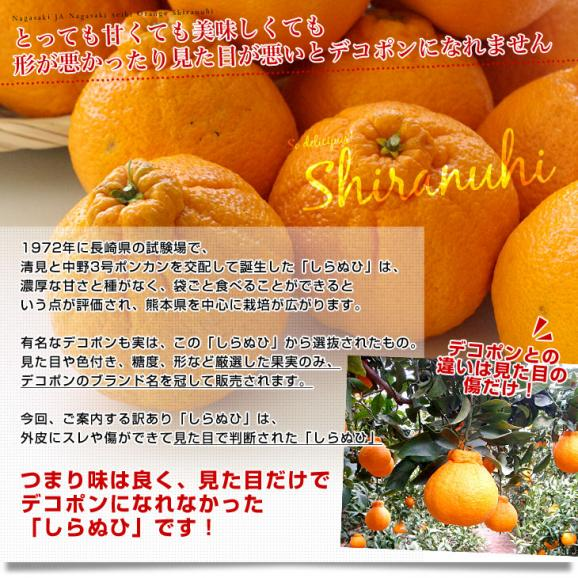長崎県より産地直送 JA長崎せいひ 不知火 (しらぬひ) 優品 4LからLサイズ 5キロ (15玉から24玉) 送料無料 柑橘 かんきつ04