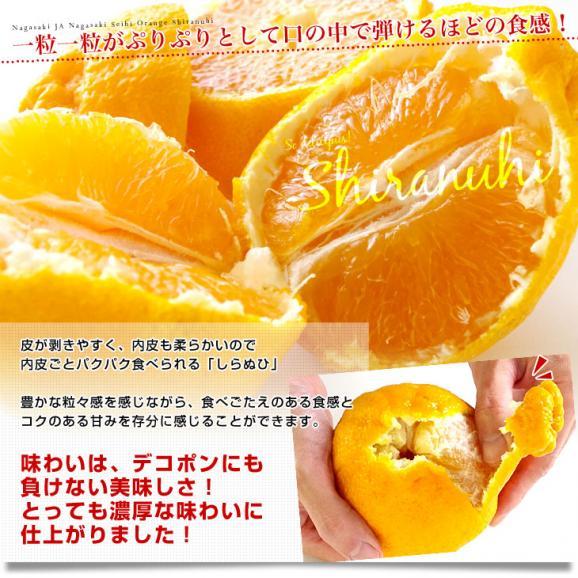 長崎県より産地直送 JA長崎せいひ 不知火 (しらぬひ) 優品 4LからLサイズ 5キロ (15玉から24玉) 送料無料 柑橘 かんきつ05