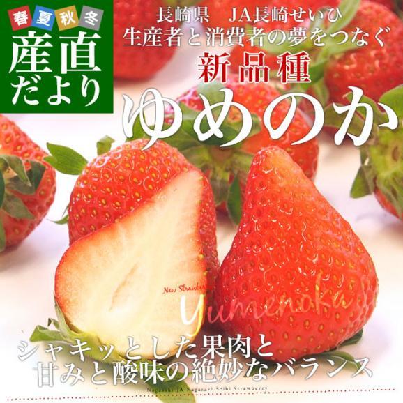 長崎県より産地直送 JA長崎せいひ 期待の新品種いちご ゆめのか 1箱 540g (270g×2パック 入り) 合計20粒から32粒入り 送料無料 産直だより 苺 イチゴ02