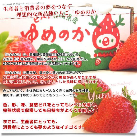 長崎県より産地直送 JA長崎せいひ 期待の新品種いちご ゆめのか 1箱 540g (270g×2パック 入り) 合計20粒から32粒入り 送料無料 産直だより 苺 イチゴ04
