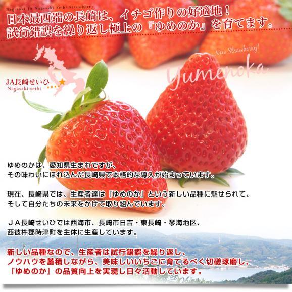 長崎県より産地直送 JA長崎せいひ 期待の新品種いちご ゆめのか 1箱 540g (270g×2パック 入り) 合計20粒から32粒入り 送料無料 産直だより 苺 イチゴ05