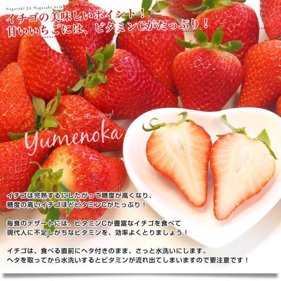 長崎県より産地直送 JA長崎せいひ 期待の新品種いちご ゆめのか 1箱 540g (270g×2パック 入り) 合計20粒から32粒入り 送料無料 産直だより 苺 イチゴ06