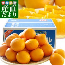送料無料 愛媛県より産地直送 JAにしうわ三崎共選 清見オレンジ 優品 2LからLサイズ 5キロ(25から32玉前後)