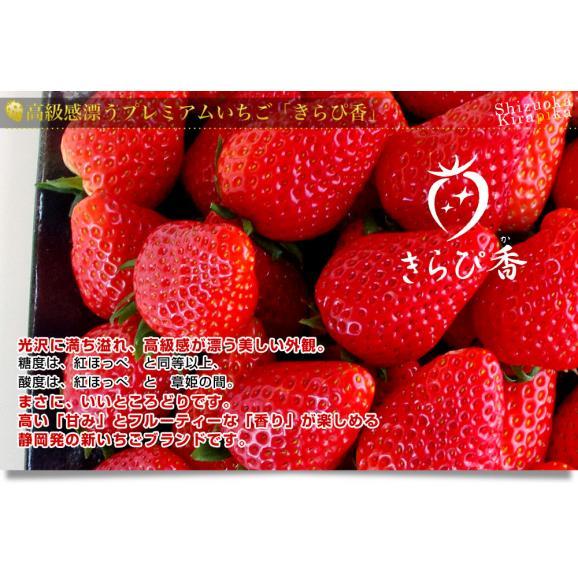 静岡県より産地直送 JA伊豆の国 プレミアムいちご きらぴ香 DX 約540g(約270g×2P入り) DXタイプ 苺 イチゴ ※クール便発送 送料無料04