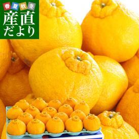 送料無料 熊本県産 JA熊本果実連 露地栽培デコポン 2LからLサイズ 5キロ (20から24玉)柑橘 オレンジ 市場スポット