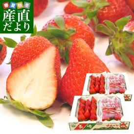 長崎県より産地直送 JA長崎せいひ 期待の新品種いちご ゆめのか 540g × 2箱セット (270g×2P)×2箱(合計20から32粒入り×2箱)産直だより 苺イチゴ 送料無料