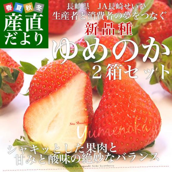 長崎県より産地直送 JA長崎せいひ 期待の新品種いちご ゆめのか 540g × 2箱セット ((270g×2P)×2箱) (合計20から32粒入り×2箱) 送料無料 産直だより 苺 イチゴ02