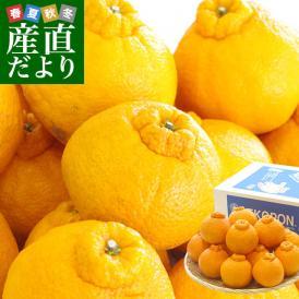 送料無料 熊本県産 JA熊本果実連 露地栽培デコポン 2LからLサイズ 3キロ (12から15玉)柑橘 オレンジ 市場スポット