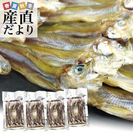 送料無料 北海道から直送 北海道産 高級珍味 本乾ししゃも 4袋セット(25g×4P) 柳葉魚 シシャモ