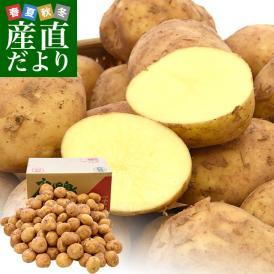 送料無料 鹿児島県産 JA鹿児島いずみ 赤土ばれいしょ 新じゃが ニシユタカ Mサイズ 約10キロ 馬鈴薯 市場スポット
