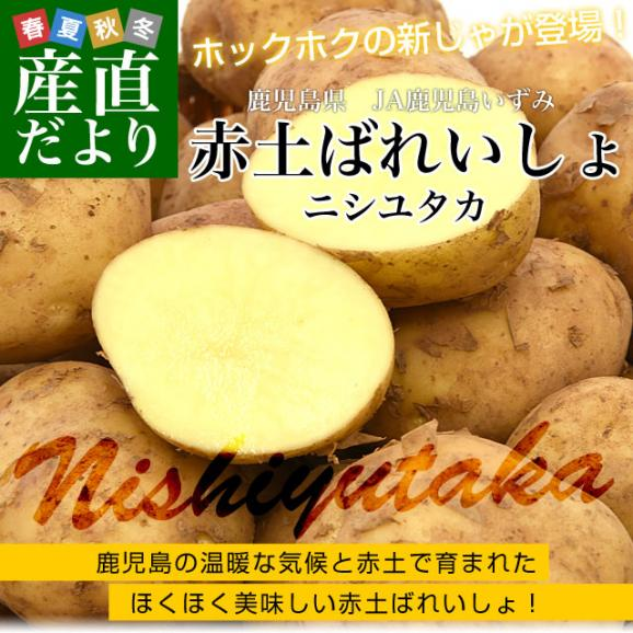 送料無料 鹿児島県産 JA鹿児島いずみ 赤土ばれいしょ 新じゃが ニシユタカ Mサイズ 約10キロ 馬鈴薯 市場スポット02
