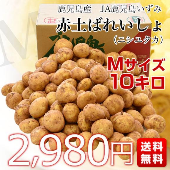 送料無料 鹿児島県産 JA鹿児島いずみ 赤土ばれいしょ 新じゃが ニシユタカ Mサイズ 約10キロ 馬鈴薯 市場スポット03