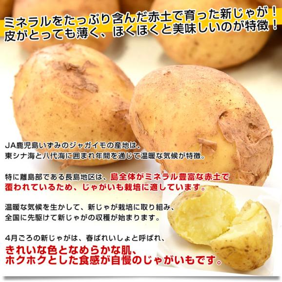 送料無料 鹿児島県産 JA鹿児島いずみ 赤土ばれいしょ 新じゃが ニシユタカ Mサイズ 約10キロ 馬鈴薯 市場スポット04