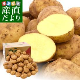 送料無料 鹿児島県産 JA鹿児島いずみ 赤土ばれいしょ 新じゃが ニシユタカ Lサイズ 約10キロ 馬鈴薯 市場スポット