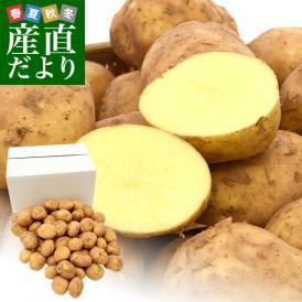 送料無料 鹿児島県産 JA鹿児島いずみ 赤土ばれいしょ 新じゃが ニシユタカ Mサイズ 約5キロ 馬鈴薯 市場スポット