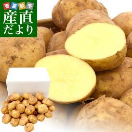 送料無料 鹿児島県産 JA鹿児島いずみ 赤土ばれいしょ 新じゃが ニシユタカ Lサイズ 約5キロ 馬鈴薯 市場スポット